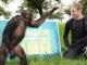 İnsan-Şempanze Benzerliği ve Evrim Üzerine